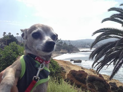 Dog Friendly Hikes Laguna Niguel