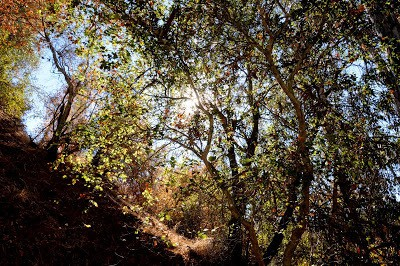 DSC 5906 Nature Section Of Rustic Canyon Single Track Hike
