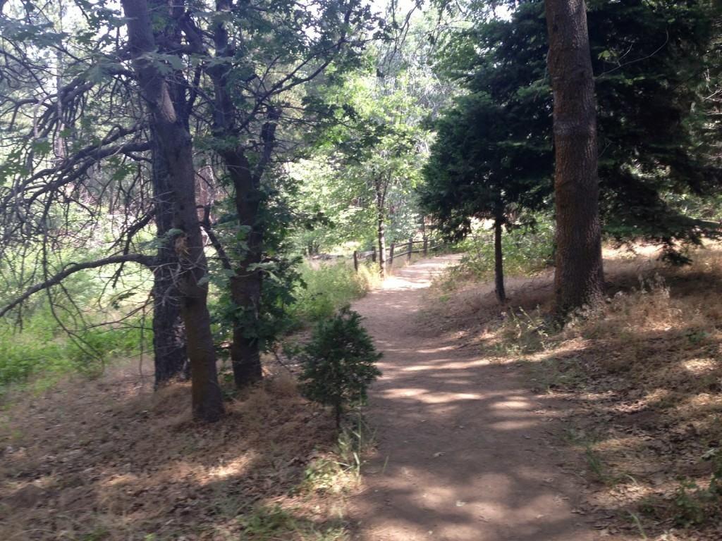 Is Big Oak Trail Dog Friendly