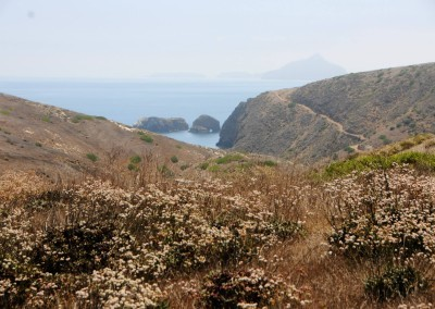 channel-islands-national-park-santa-barbara-island-hiking-trail-12