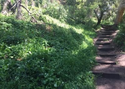 Franklin-Canyon-Park-Hike-Los-Angeles-Hiking-Trails-Santa-Monica-Mountains-2