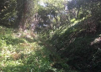 Franklin-Canyon-Park-Hike-Los-Angeles-Hiking-Trails-Santa-Monica-Mountains-3