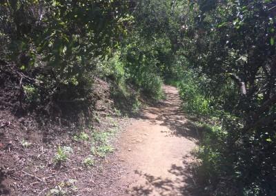 Franklin-Canyon-Park-Hike-Los-Angeles-Hiking-Trails-Santa-Monica-Mountains-4