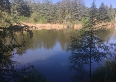 Franklin-Canyon-Park-Hike-Los-Angeles-Hiking-Trails-Santa-Monica-Mountains-6