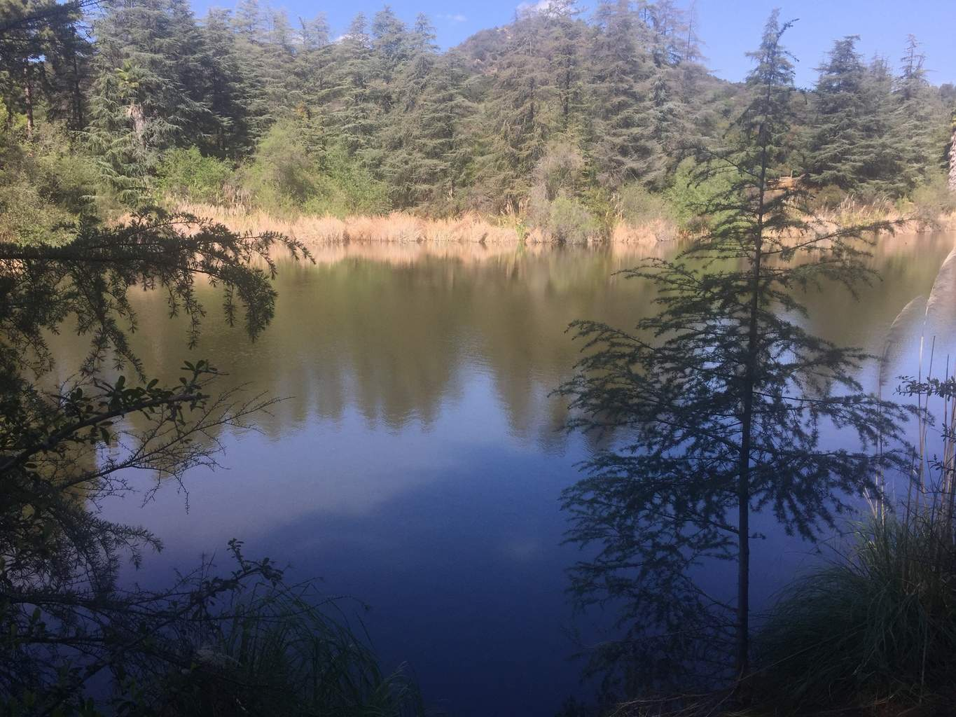 Franklin Canyon Park Hike Best Los Angeles Hiking Trails