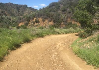 Franklin-Canyon-Park-Hike-Los-Angeles-Hiking-Trails-Santa-Monica-Mountains-9