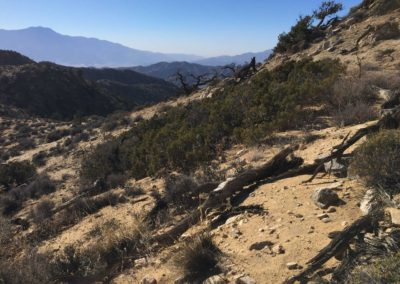 joshua-tree-hike-palm-springs-hikes-10