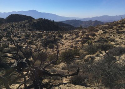 joshua-tree-hike-palm-springs-hikes-12
