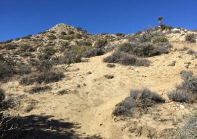 joshua-tree-hike-palm-springs-hikes-13