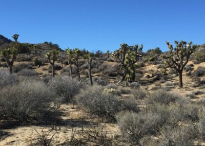 joshua-tree-hike-palm-springs-hikes-20