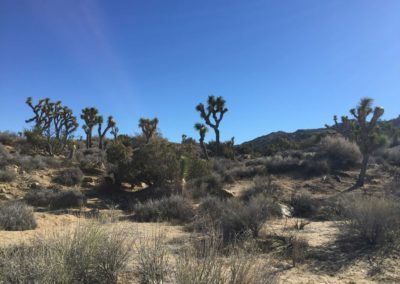 joshua-tree-hike-palm-springs-hikes-22