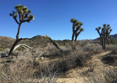 joshua-tree-hike-palm-springs-hikes-24