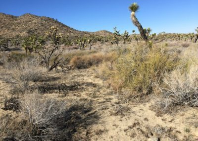 joshua-tree-hike-palm-springs-hikes-25