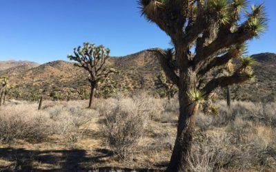 Joshua Tree | Warren Peak Hiking Trail