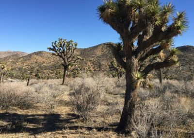 joshua-tree-hike-palm-springs-hikes-28