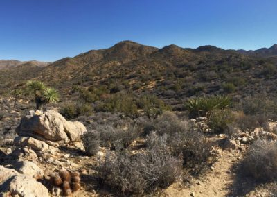 joshua-tree-hike-palm-springs-hikes-31