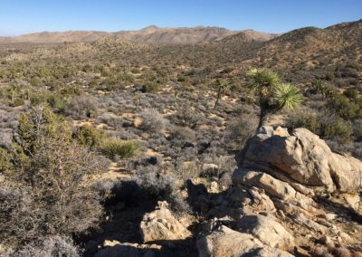 joshua-tree-hike-palm-springs-hikes-33