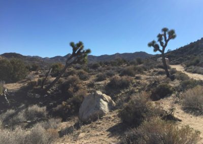 joshua-tree-hike-palm-springs-hikes-39