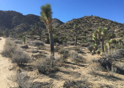joshua-tree-hike-palm-springs-hikes-41