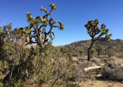 joshua-tree-hike-palm-springs-hikes-42