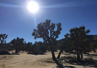 joshua-tree-hike-palm-springs-hikes-45