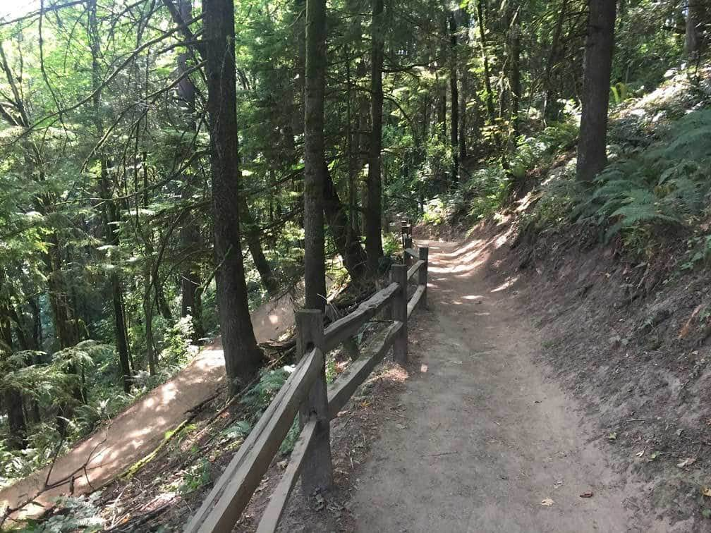 Dog Friendly Hiking Trails Washington