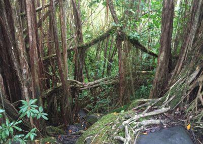 kona-hawaii-hike-akaka-water-falls