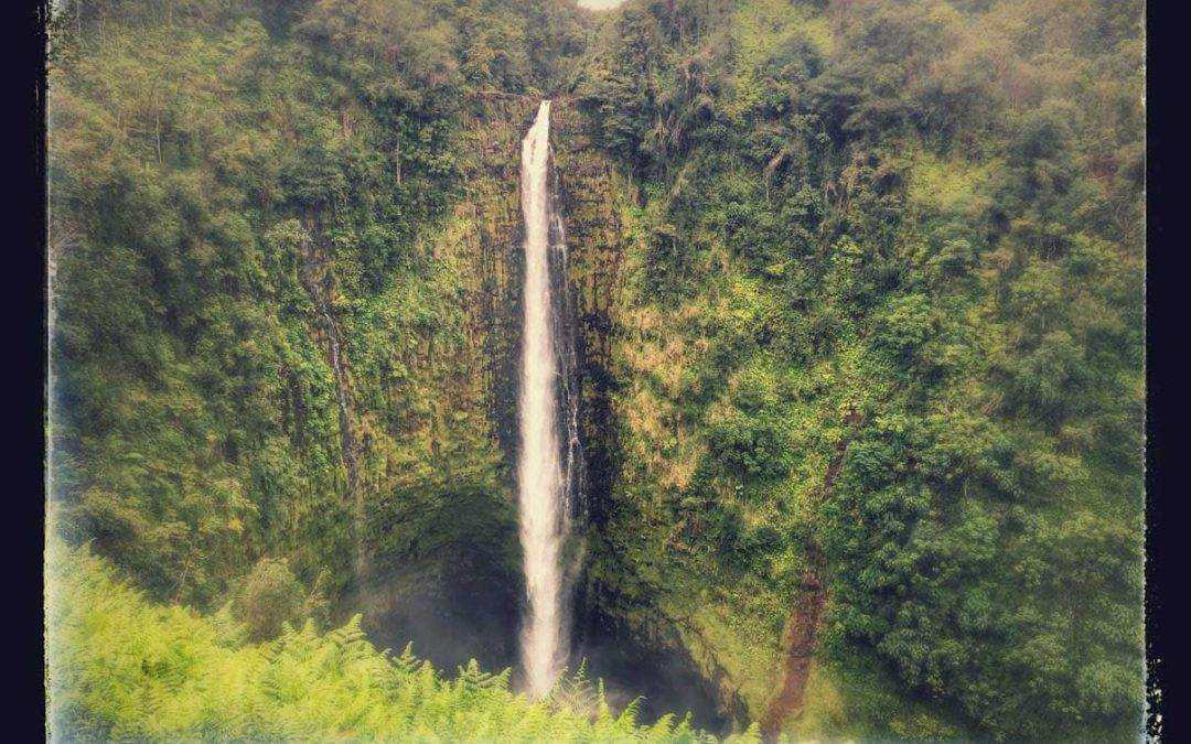Akaka falls state park kah n falls hike hawaii hiking for Plenty of fish hawaii