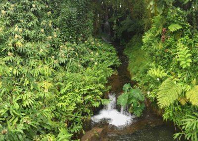 kona-waterfall-hike-best-hawa-hike-7