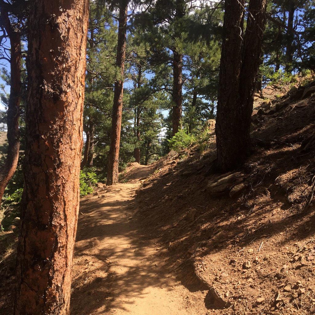 Mt. Galbraith Trail Loop