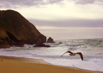 gray-whale-beach-half-moon-bay-beach-hikes-2