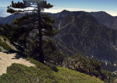 mt-baldy-hike-run-to-the-top-trail-12