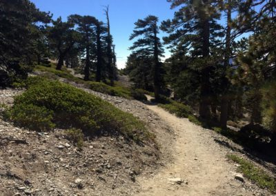 mt-baldy-hike-run-to-the-top-trail-13