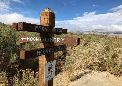 coachella valley perserve, palm springs hike, things to do in palm springs, palm tree hike, best hikes in palm springs, mccallum trail, sean tiner, ashley tiner