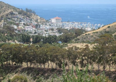 avalon-catalina-trail