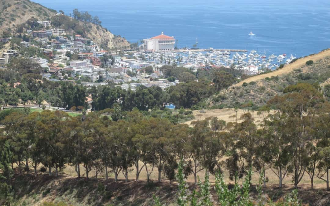 Wrigley Monument Catalina Hiking Trail