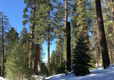 kings-canyon-giant-sequoia-general-sherman-tree-10