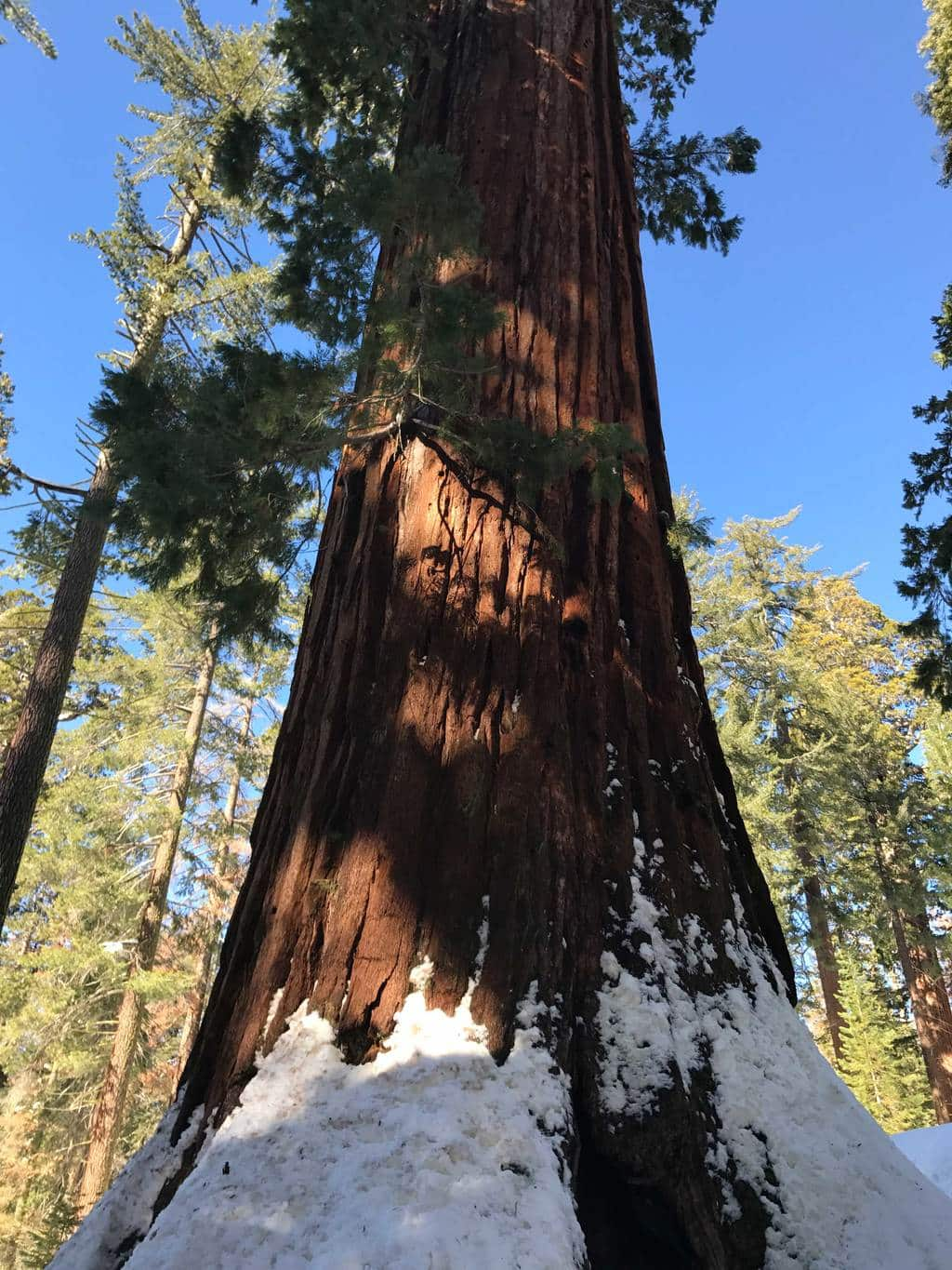 kings-canyon-giant-sequoia-general-sherman-tree-11