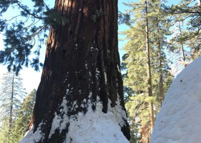 kings-canyon-giant-sequoia-general-sherman-tree-14