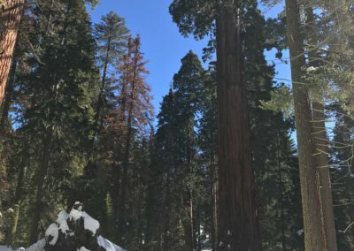 kings-canyon-giant-sequoia-general-sherman-tree-19