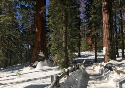 kings-canyon-giant-sequoia-general-sherman-tree-21
