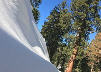 kings-canyon-giant-sequoia-general-sherman-tree-5