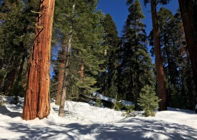 kings-canyon-giant-sequoia-general-sherman-tree-6