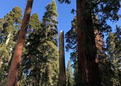 kings-canyon-giant-sequoia-general-sherman-tree-7