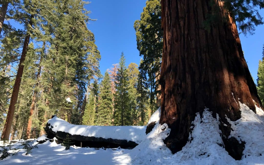 The General Sherman Tree Hiking Trail – Sequoia & Kings Canyon National Park