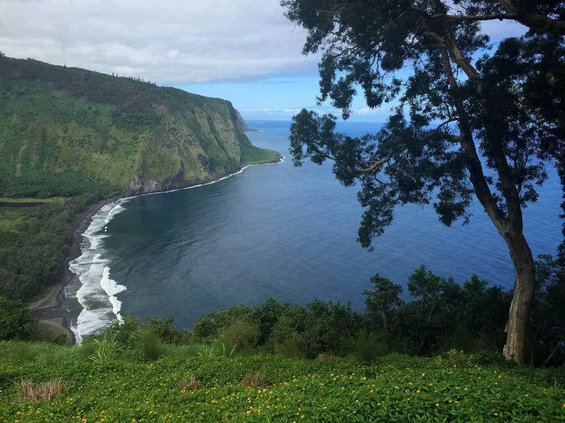 Dog Friendly Hikes Big Island