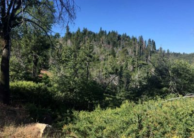 lake-arrowhead-hiking-trail-hidden-bench-13