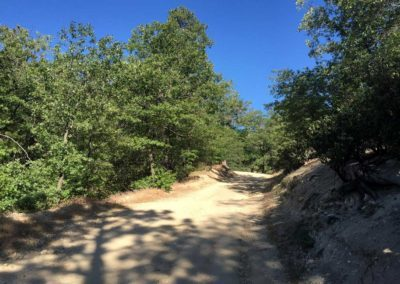 lake-arrowhead-hiking-trail-hidden-bench-15