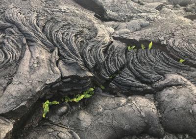 Volcano-National-Park-Hawaii-Hiking-Trail-2
