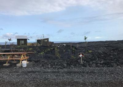 Volcano-National-Park-Hawaii-Hiking-Trail-22